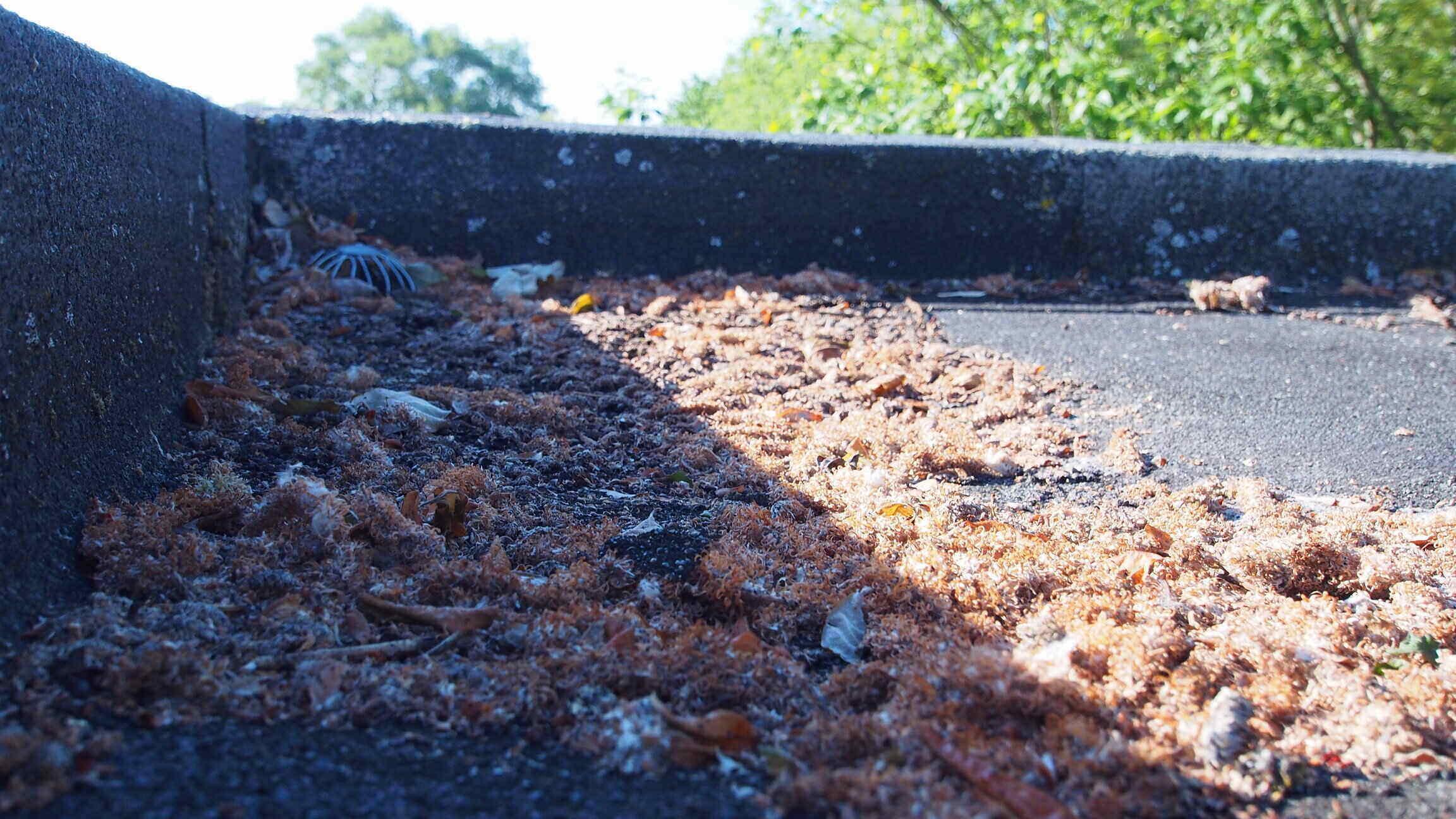 Mousse et detritus sur toiture